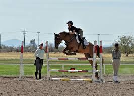 horse trainer.jpeg